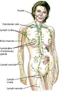 manuální lymf.celého těla 2